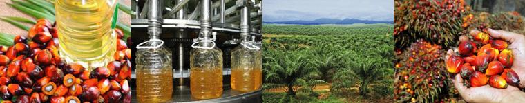 パーム油農園投資